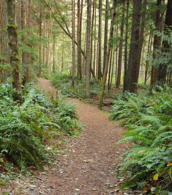 Main trail near the Crossroads